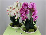 Uk orchidea aranž - velkoobchod, dovoz květin, řezané květiny Brno