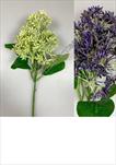 Uk bez nerozkvetlý 30cm - velkoobchod, dovoz květin, řezané květiny Brno