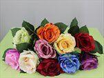 Uk růže Aqua 29cm - velkoobchod, dovoz květin, řezané květiny Brno