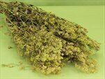 Tráva 100g/70cm zelená - velkoobchod, dovoz květin, řezané květiny Brno