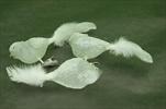 Ptáček na klipu sklo/peří 3ks/10cm bílá - velkoobchod, dovoz květin, řezané květiny Brno