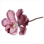 Květ latex zápich pr.5V20cm červená - velkoobchod, dovoz květin, řezané květiny Brno