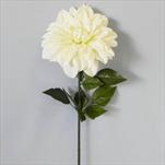 Jiřina umělá bílá - velkoobchod, dovoz květin, řezané květiny Brno