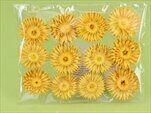 Slaměnka sušina S/12 žlutá - velkoobchod, dovoz květin, řezané květiny Brno