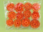 Slaměnka sušina S/12 oranžová - velkoobchod, dovoz květin, řezané květiny Brno