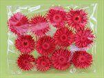Slaměnka sušina S/12 červená - velkoobchod, dovoz květin, řezané květiny Brno