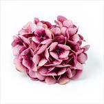 Hortenzie květ textil pr.18cm růžová - velkoobchod, dovoz květin, řezané květiny Brno