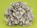 Hortenzie květ textil pr.18cm šedá - velkoobchod, dovoz květin, řezané květiny Brno