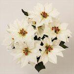 Poinsettia kytice x7 pr.15/30cm červená - velkoobchod, dovoz květin, řezané květiny Brno