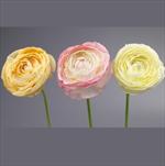 Ranunculus umělý 18cm mix - velkoobchod, dovoz květin, řezané květiny Brno