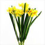Narcis kytice umělá 62cm žlutá - velkoobchod, dovoz květin, řezané květiny Brno