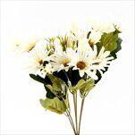 Kopretiny kytice x7 34cm krémová - velkoobchod, dovoz květin, řezané květiny Brno