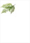 Kapradí umělé 70cm zelená - velkoobchod, dovoz květin, řezané květiny Brno