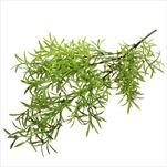 Asparagus umělý 76cm zelený - velkoobchod, dovoz květin, řezané květiny Brno