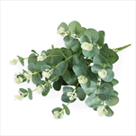 Eucalyptus  umělý 50cm zelená - velkoobchod, dovoz květin, řezané květiny Brno