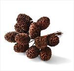 Svazek šišky 12ks/13cm natural - velkoobchod, dovoz květin, řezané květiny Brno