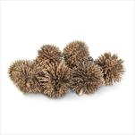 Plody přízdoba vánoční 20ks/3cm šampáň - velkoobchod, dovoz květin, řezané květiny Brno