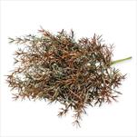 Asparagus umělý 8cm mix - velkoobchod, dovoz květin, řezané květiny Brno