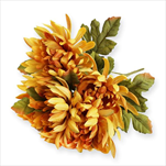 Chryzanthéma kytice 5x/49cm žlutooranž - velkoobchod, dovoz květin, řezané květiny Brno