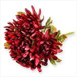 Chyzanthéma kytice 5x/49cm bordó - velkoobchod, dovoz květin, řezané květiny Brno