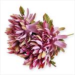 Chryzantéma kytice x5/49cm růžová - velkoobchod, dovoz květin, řezané květiny Brno