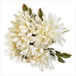 Chryzantéma kytice x5/49cm krémová - velkoobchod, dovoz květin, řezané květiny Brno