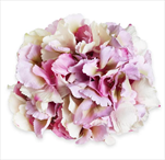 Hortenzie květ pr.20cm fialová mix - velkoobchod, dovoz květin, řezané květiny Brno