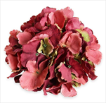 Hortenzie květ pr.20cm bordó/zelená - velkoobchod, dovoz květin, řezané květiny Brno