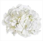 Hortenzie květ pr.20cm bílá - velkoobchod, dovoz květin, řezané květiny Brno