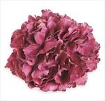 Hortenzie květ pr.20cm bordó - velkoobchod, dovoz květin, řezané květiny Brno
