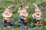 Ke trpaslík s jutovou čepičkou - velkoobchod, dovoz květin, řezané květiny Brno