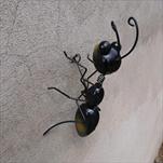 Kov mravenec na zed menší - velkoobchod, dovoz květin, řezané květiny Brno