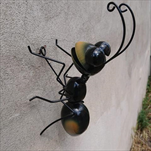 Kov mravenec na zeď větší - velkoobchod, dovoz květin, řezané květiny Brno