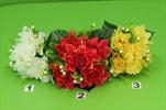 Uk dahlia trs - velkoobchod, dovoz květin, řezané květiny Brno