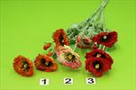 Uk Mák - velkoobchod, dovoz květin, řezané květiny Brno