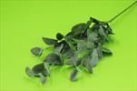 Uk Eucalyptus  - velkoobchod, dovoz květin, řezané květiny Brno