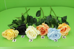 Uk růže poupě - velkoobchod, dovoz květin, řezané květiny Brno