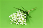 Uk konvalinka X3 15cm  - velkoobchod, dovoz květin, řezané květiny Brno
