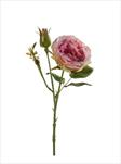 Uk rose anne 37cm pink - velkoobchod, dovoz květin, řezané květiny Brno