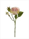 Uk rose anne 37cm peach - velkoobchod, dovoz květin, řezané květiny Brno