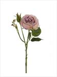 Uk rose anne 37cm lt.purple - velkoobchod, dovoz květin, řezané květiny Brno