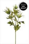 Uk Eryngium X3/65cm white - velkoobchod, dovoz květin, řezané květiny Brno