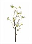 Uk Heptacodium 50cm bílé - velkoobchod, dovoz květin, řezané květiny Brno