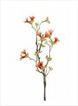 Uk Heptacodium 50cm oranžové - velkoobchod, dovoz květin, řezané květiny Brno