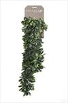 Uk Crassula závěs X3 80cm - velkoobchod, dovoz květin, řezané květiny Brno