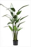 Uk Heliconia 125cm/22lvs - velkoobchod, dovoz květin, řezané květiny Brno