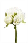 Uk Paeony X3/23cm cream/green - velkoobchod, dovoz květin, řezané květiny Brno