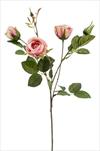 Uk rose Peggy 60cm pink - velkoobchod, dovoz květin, řezané květiny Brno