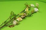 Uk Lunaria metallic 110cm gold - velkoobchod, dovoz květin, řezané květiny Brno