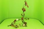 Uk Lunaria metallic 180cm copper - velkoobchod, dovoz květin, řezané květiny Brno